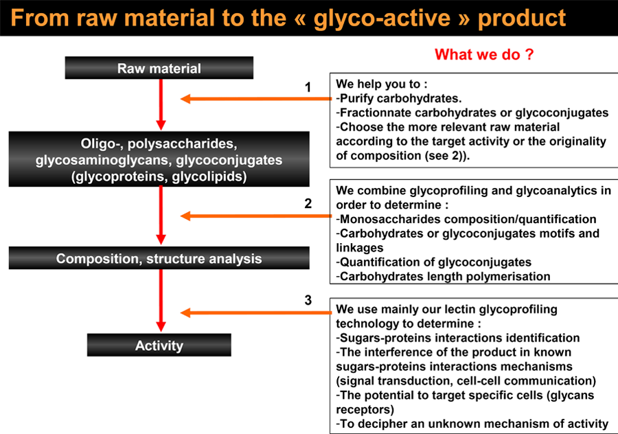 From raw material to the glyco-active product